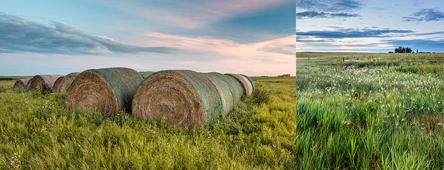Collage: hay bails and farm field